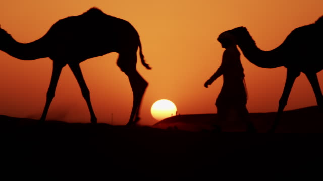 aerial camels being led by handlers across desert - camel stock videos & royalty-free footage
