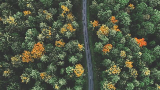 aerial capture of forest with asphalt road at autumn - ハイデルベルク点の映像素材/bロール