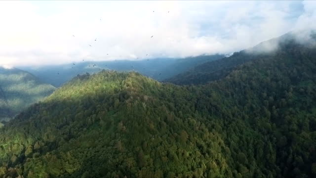 aerial/ caucasus mountians with black sea in background and migrating birds, batumi, georgia - caucasus stock videos and b-roll footage