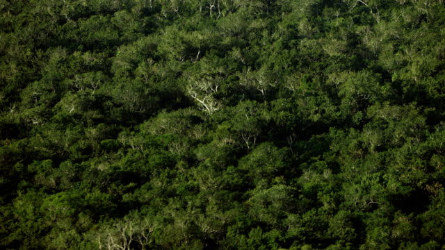 Aerial Close Shot Of Forest In Mexico