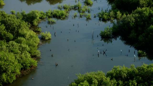 aerial close shot of wetlands landscape - yucatan peninsula stock videos and b-roll footage