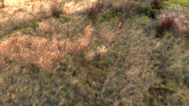 aerial close-up: wild plants on meadow - clima arido video stock e b–roll