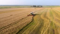 aerial combine Harvester gathers the wheat