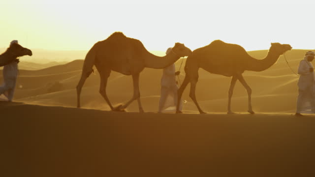 aerial convoy of camels with owners across desert - camel train stock videos & royalty-free footage