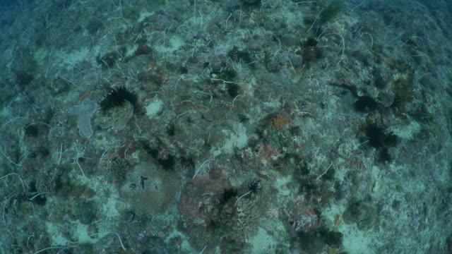 Aerial coral reef undersea