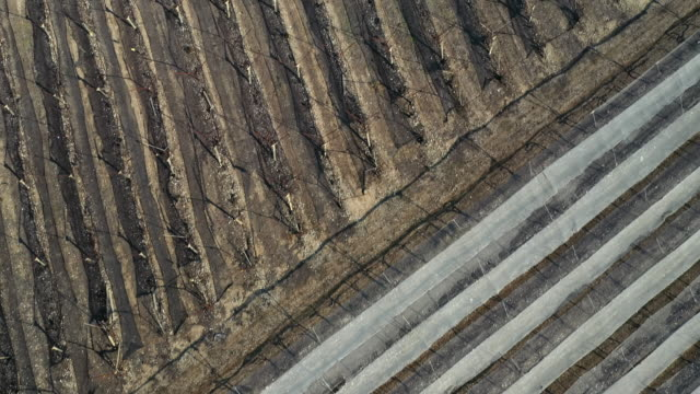 aerial: covered and uncovered vineyards  - lachish, israel - 床点の映像素材/bロール