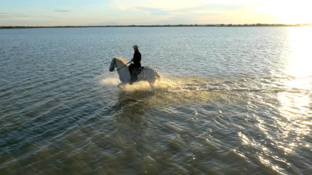vídeos de stock e filmes b-roll de aerial cowboy sunrise camargue horse mediterranean sea travel - cavalgar
