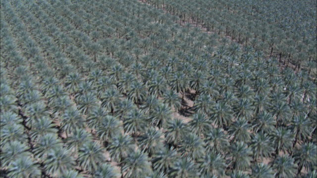 aerial date palms northern judea desert, almog, israel - irrigation equipment stock videos and b-roll footage