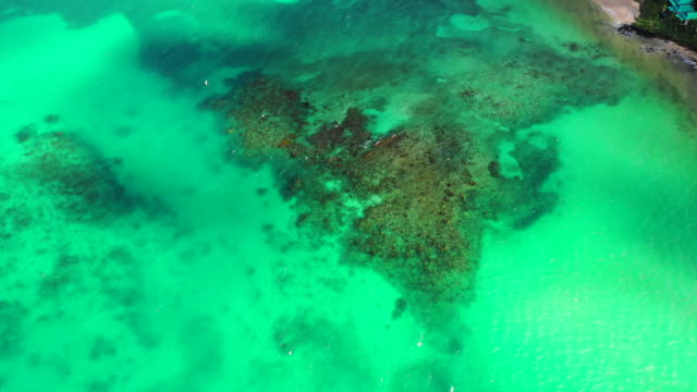 aerial descend: vibrant green ocean water with sunlight reflecting - little corn island, nicaragua - nicaragua stock videos & royalty-free footage