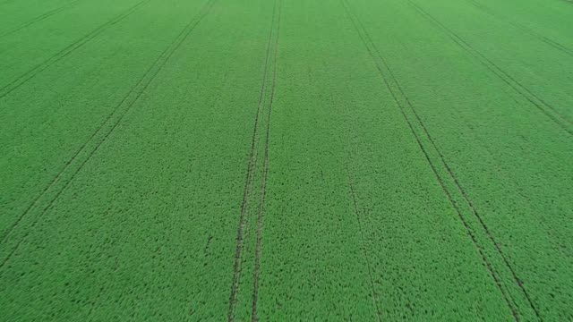 aerial descending view over a bean field in ottawa illinois - illinois stock videos and b-roll footage
