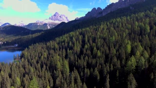 パインの森上空のドロマイト山 - 松の木点の映像素材/bロール