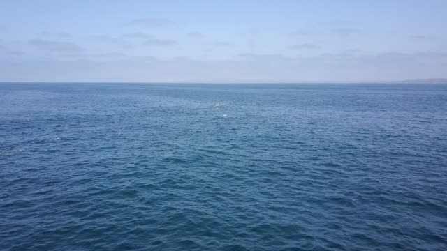 aerial: dolphins swimming through the wide open ocean - wide stock videos & royalty-free footage