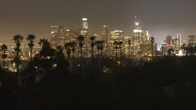 Aerial Downtown Los Angeles Palm Trees Night
