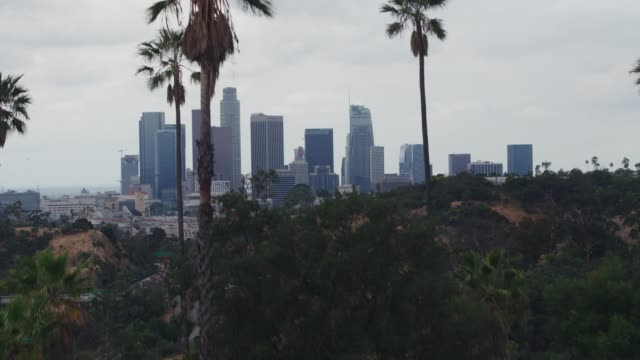 aerial downtown los angeles palm trees - overcast stock videos & royalty-free footage