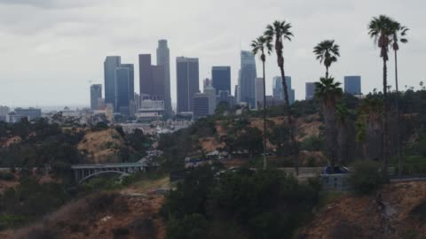aerial downtown los angeles palm trees - los angeles county stock videos & royalty-free footage