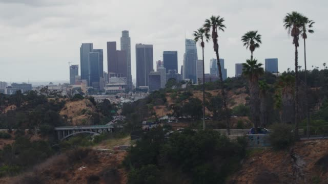 aerial downtown los angeles palm trees - los angeles stock videos & royalty-free footage