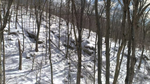 Aerial drone 4k view pans down a tree in Winter with snow on the ground RF