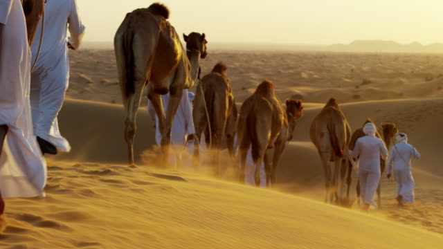 aerial drone arab males leading camels through desert - camel train stock videos & royalty-free footage