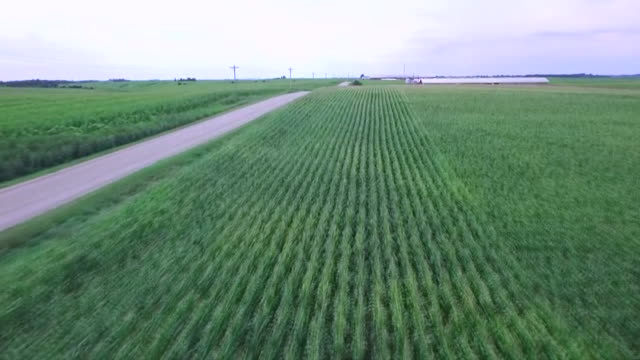 aerial drone establishing shot of a farm in iowa. - business or economy or employment and labor or financial market or finance or agriculture stock videos & royalty-free footage