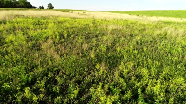 aerial drone flight over a field with flowers in lincoln nebraska - nebraska stock-videos und b-roll-filmmaterial