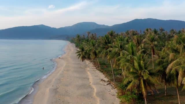 vídeos de stock, filmes e b-roll de vôo aéreo do zangão sobre a árvore bonita da praia e de coco em khanom, província de nakhon si thammarat, sul de tailândia - palmeira