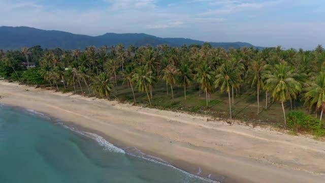 aerial drone flygning över vackra stranden och kokosnöt träd i khanom, nakhon si thammarat provinsen, södra thailand - utebassäng bildbanksvideor och videomaterial från bakom kulisserna