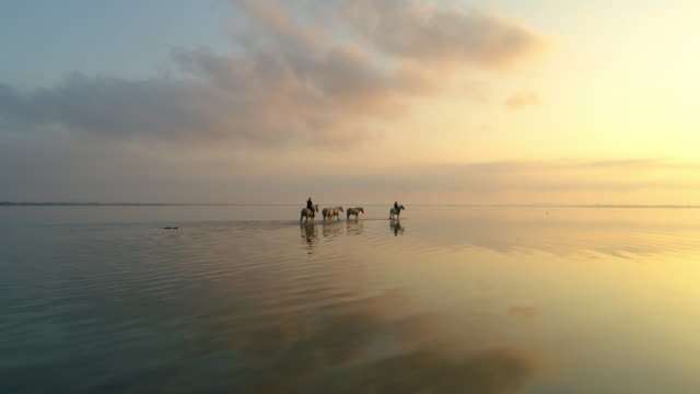 aerial: drone flying forward towards female wranglers wading in sea with reflection against orange sky - camargue, france - walking in water stock videos & royalty-free footage