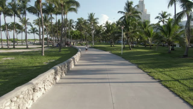 aerial: drone flying forward towards people on footpath amidst palm trees at park during sunny day - miami, florida - miami stock videos & royalty-free footage