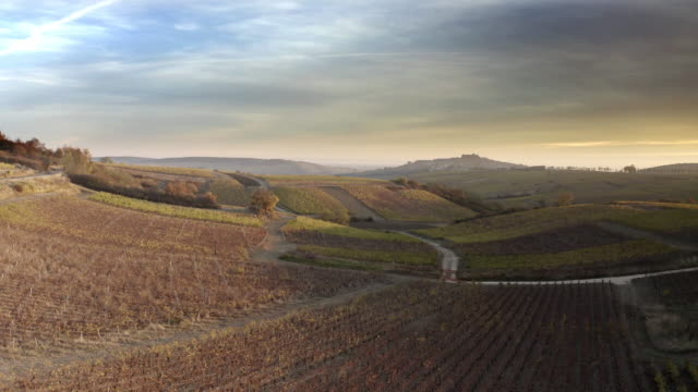 vídeos de stock e filmes b-roll de aerial/ drone footage of an autumn sunrise in the vineyards of sancerre, loire valley, france. - vinha