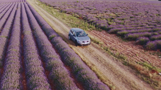 Aerial drone footage of car driving through lavender fields, Provence, France
