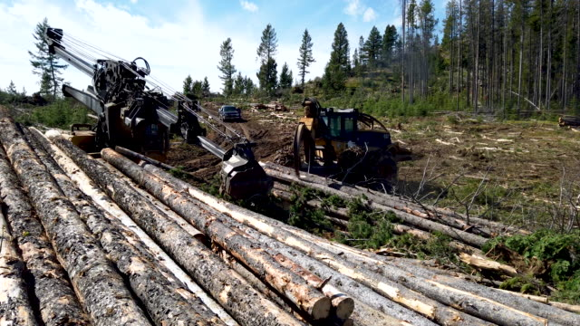 aerial drone footage of logging. sun mountain logging employees and brothers jeremy lott and brian lott of deer lodge, montana, operate a stroke boom... - forestry industry stock videos & royalty-free footage