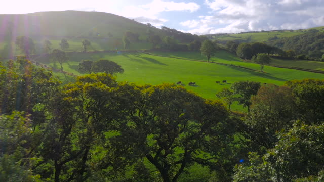 vídeos de stock e filmes b-roll de aerial drone footage of sheep and cattle in fields grazing - país de gales
