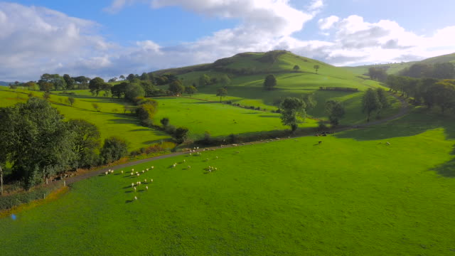 vídeos de stock e filmes b-roll de aerial drone footage of sheep and cattle surrounded by beautiful landscapes - pembrokeshire