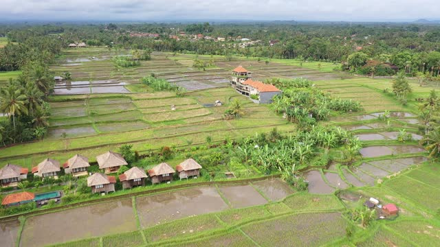 aerial drone footage of the mixed rural and residential district in the middle of rice paddies in ubud in bali in indonesia - ubud district stock videos & royalty-free footage