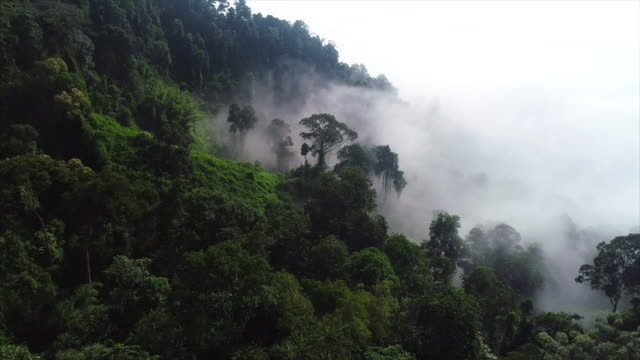 vídeos de stock e filmes b-roll de aerial drone footage of the rainforest in morning with a lot of fog and mist - nevoeiro