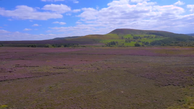aerial drone footage of the yorkshire moors landscape with heather in bloom - heather hunter stock videos & royalty-free footage