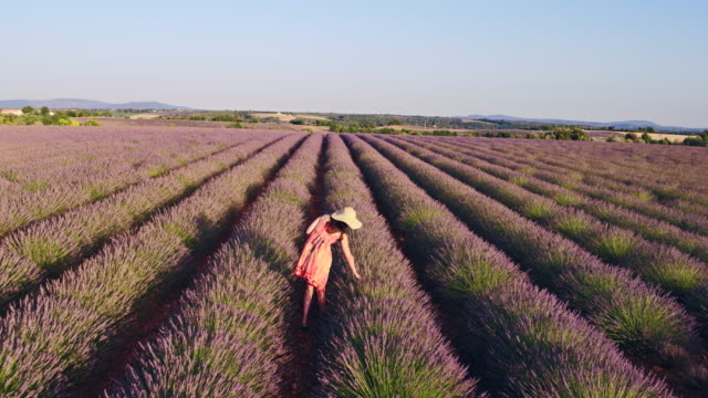 aerial drone footage of woman in lavender field at sunset, provence, france - abundance stock videos & royalty-free footage