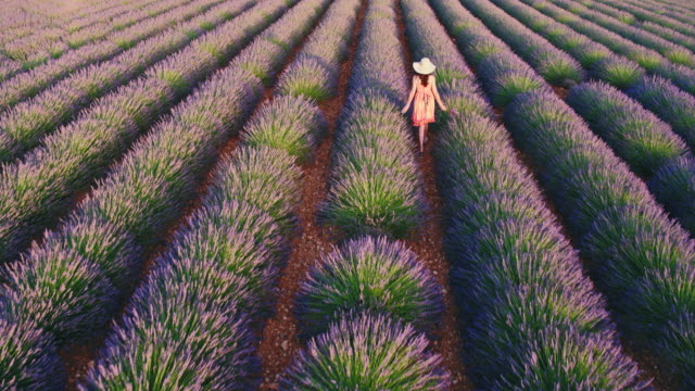 vidéos et rushes de aerial drone footage of woman in lavender field at sunset, provence, france - robe