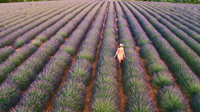 aerial drone footage of woman in lavender field at sunset, provence, france - one mature woman only stock videos & royalty-free footage