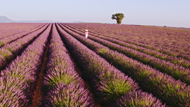 aerial drone footage of woman in lavender field at sunset, provence, france - 植物 ラベンダー点の映像素材/bロール