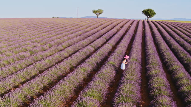 Aerial drone footage of woman in lavender field, Provence, France