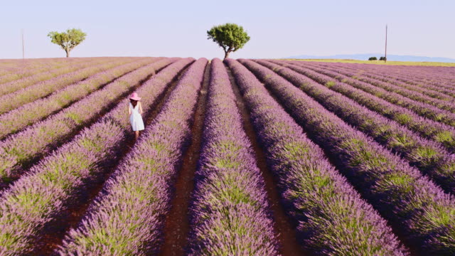 aerial drone footage of woman in lavender field, provence, france - lavender stock videos & royalty-free footage