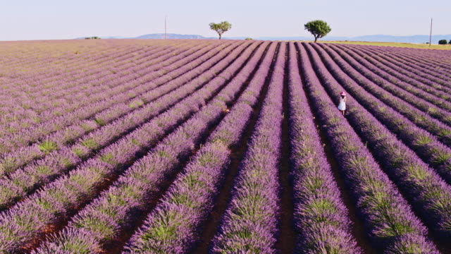 aerial drone footage of woman in lavender field, provence, france - white dress stock videos & royalty-free footage