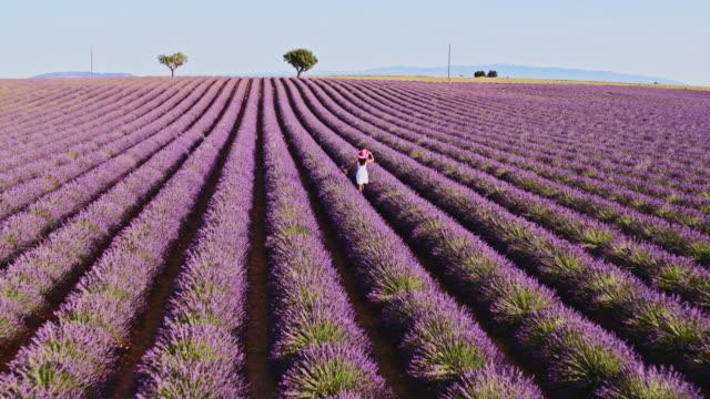 aerial drone footage of woman in lavender field, provence, france - vestito bianco video stock e b–roll