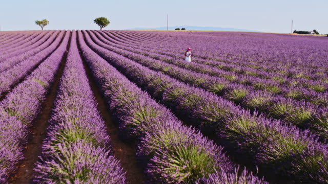 vídeos de stock, filmes e b-roll de aerial drone footage of woman in lavender field, provence, france - 30 segundos ou mais