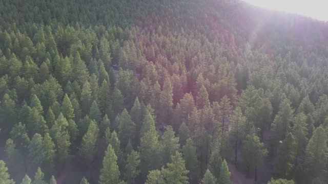 aerial: drone moving over green trees in forest, scenic view of landscape - wellington lake, colorado - coniferous stock videos & royalty-free footage