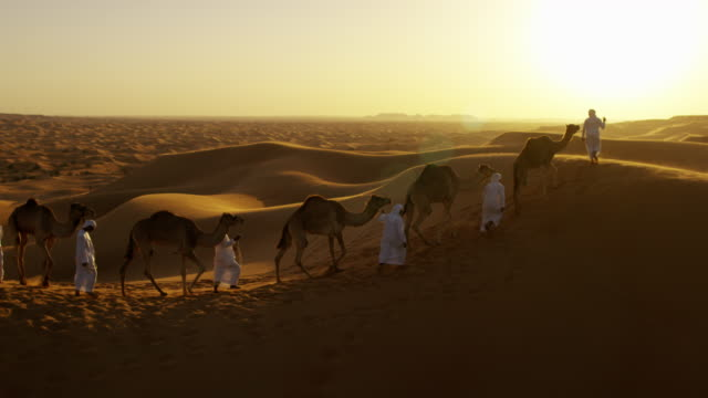 aerial drone of arab males with desert camels - camel stock videos & royalty-free footage