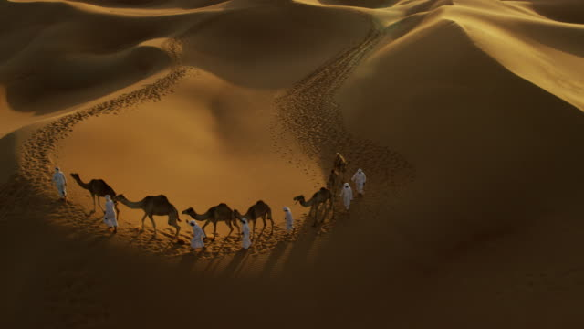 aerial drone of camel train travelling across desert - tourist stock videos & royalty-free footage