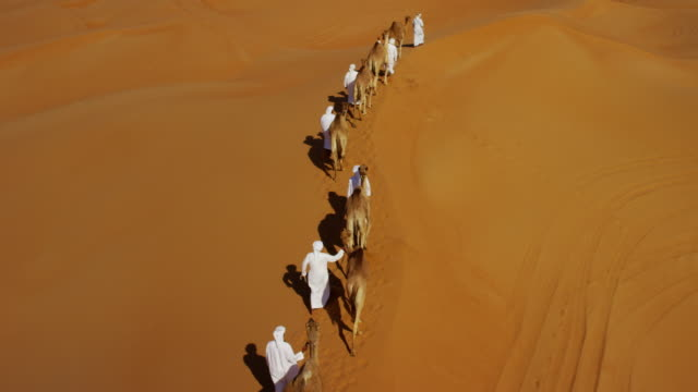 aerial drone of camel train travelling across desert - vereinigte arabische emirate stock-videos und b-roll-filmmaterial