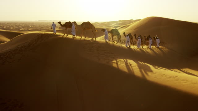 aerial drone of camel train travelling across desert - camel train stock videos & royalty-free footage